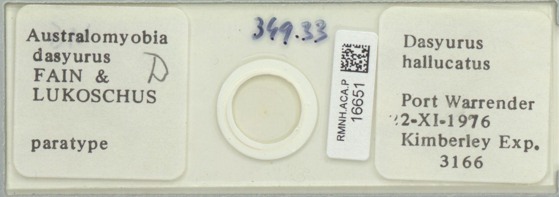RMNH.ACA.P.16651 | Australomyobia dasyurus