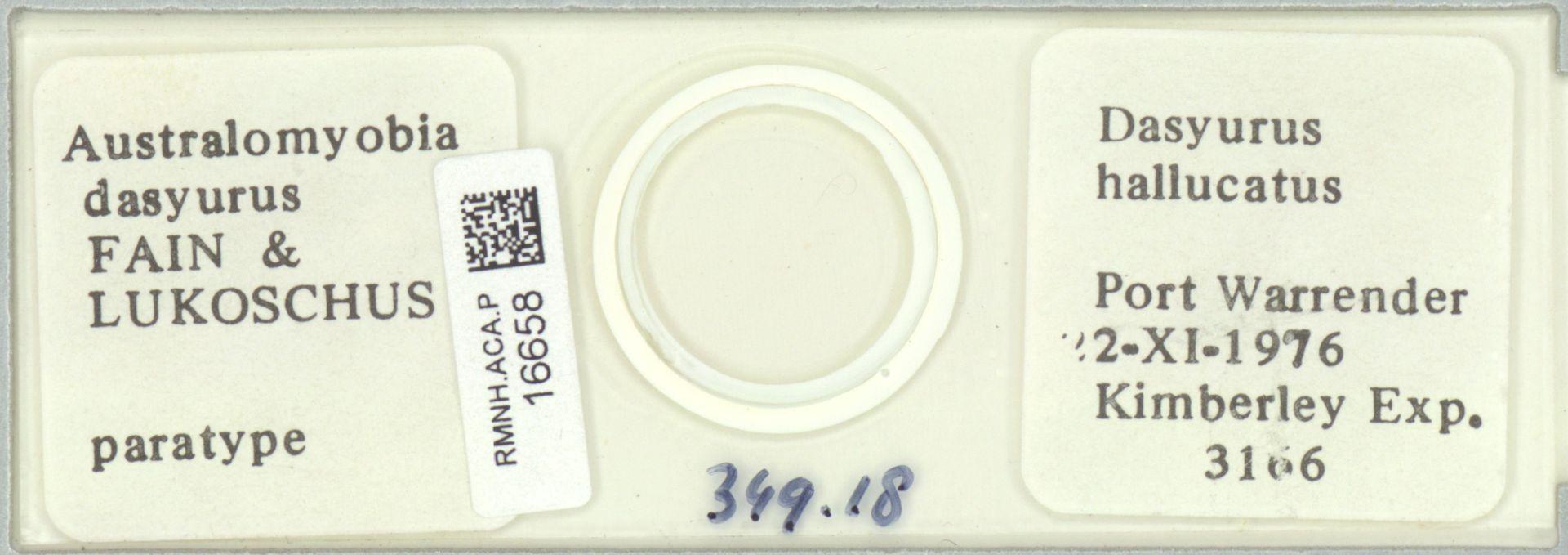 RMNH.ACA.P.16658 | Australomyobia dasyurus