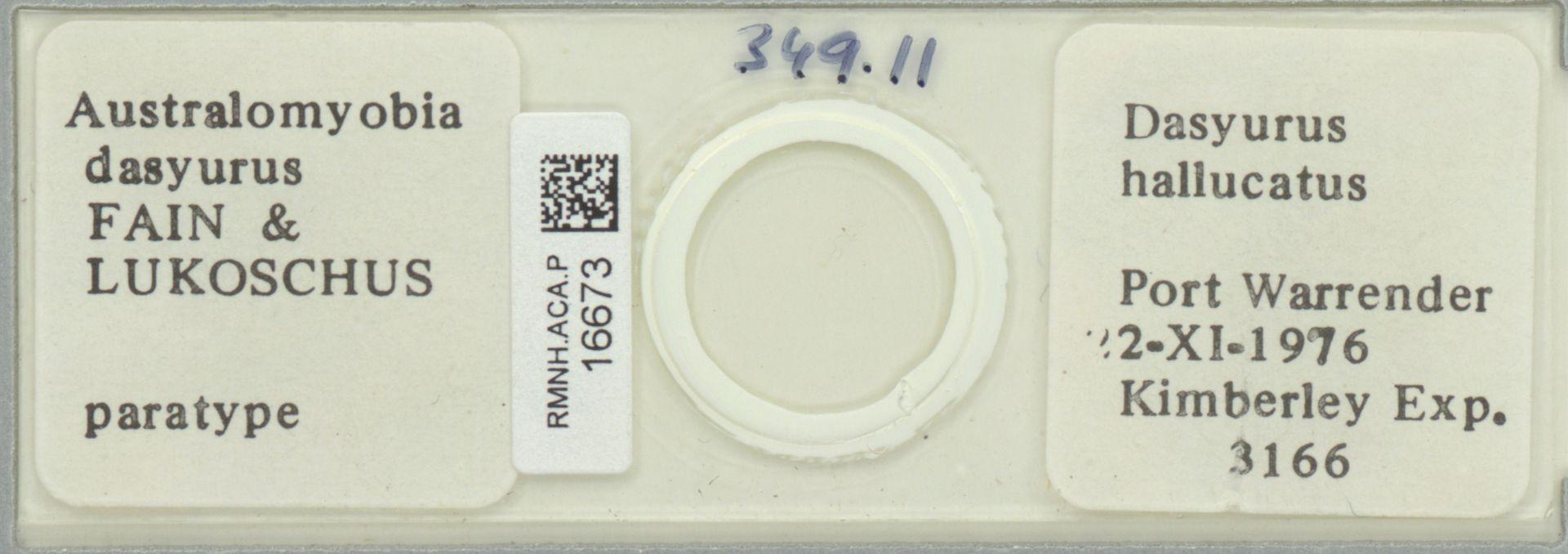 RMNH.ACA.P.16673 | Australomyobia dasyurus