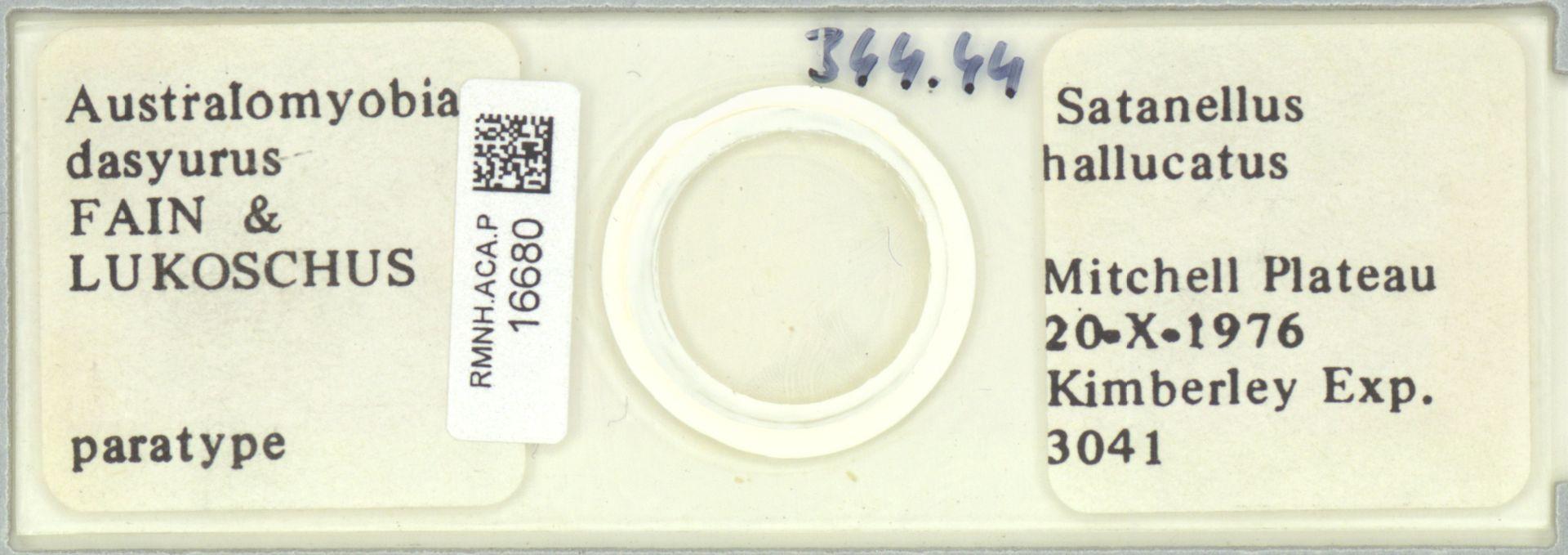 RMNH.ACA.P.16680 | Australomyobia dasyurus