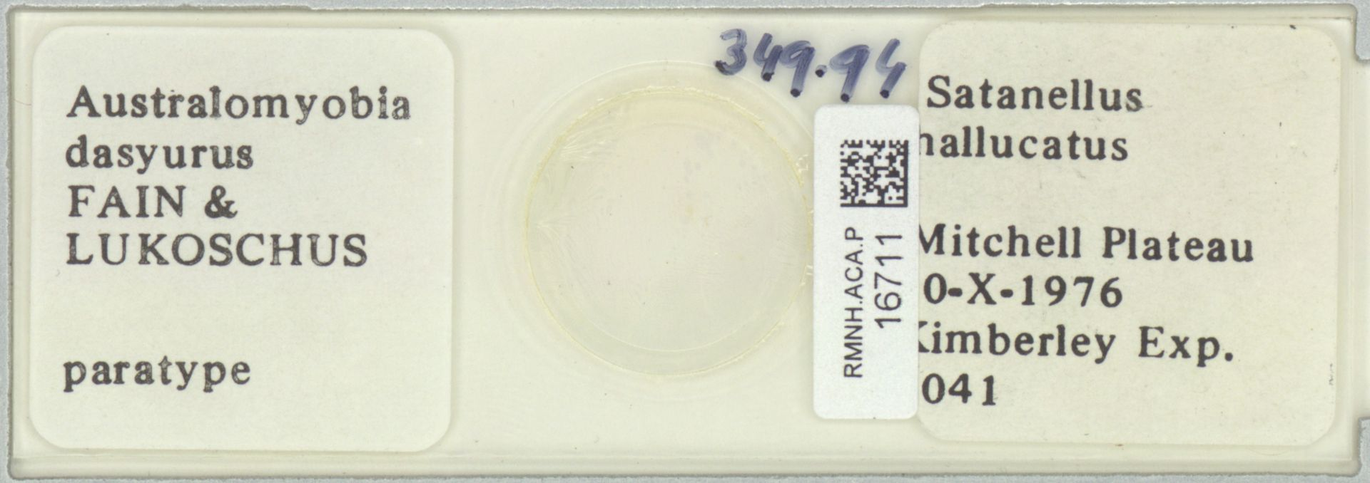 RMNH.ACA.P.16711 | Australomyobia dasyurus