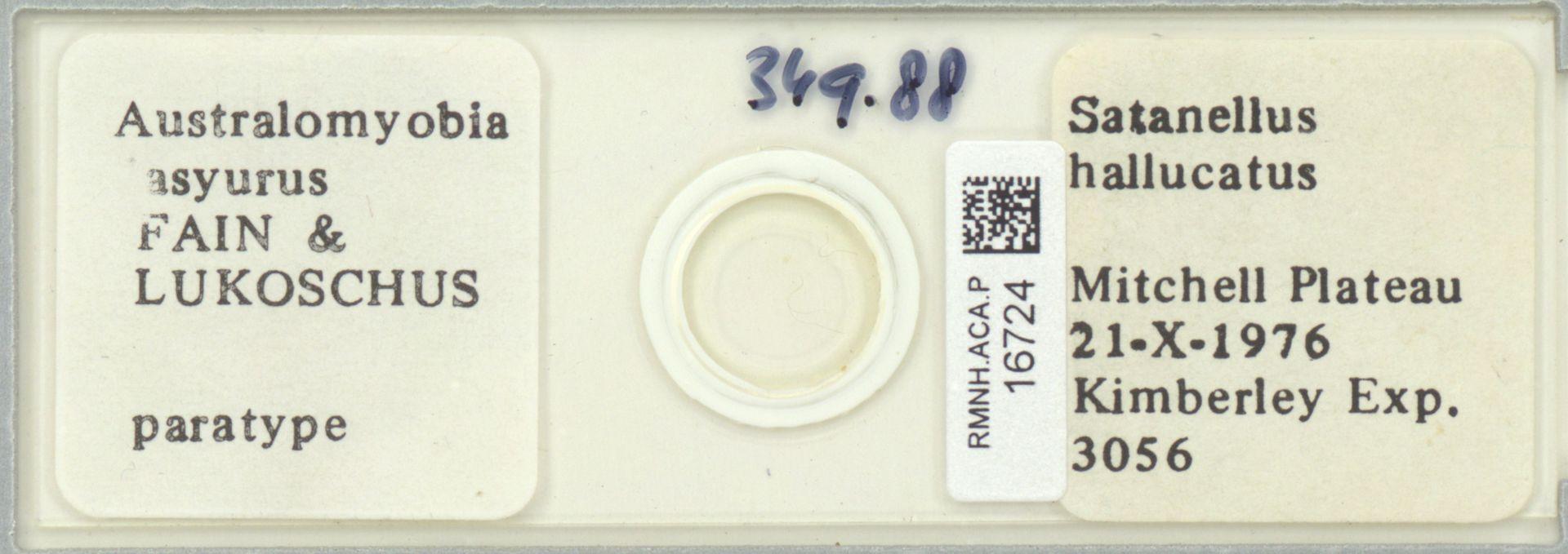 RMNH.ACA.P.16724 | Australomyobia dasyurus