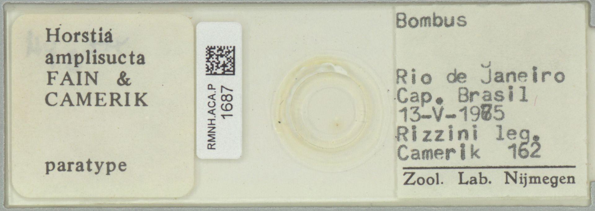 RMNH.ACA.P.1687 | Horstia amplisucta Fain & Camerik
