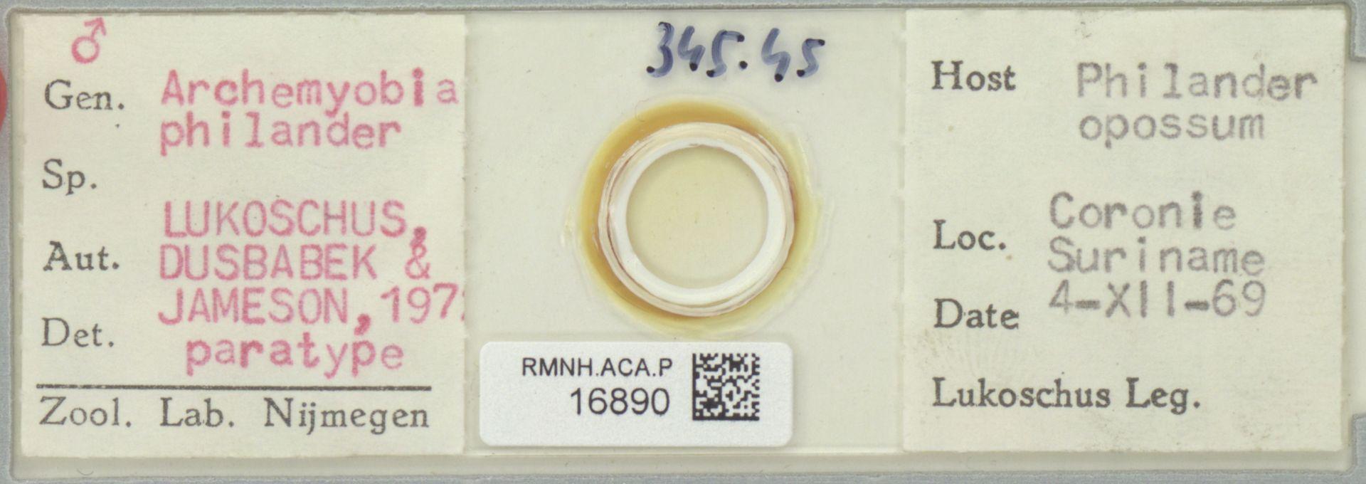RMNH.ACA.P.16890 | Archemyobia philander