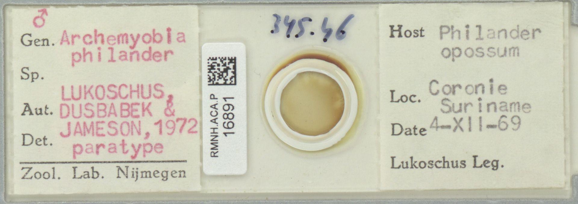 RMNH.ACA.P.16891 | Archemyobia philander
