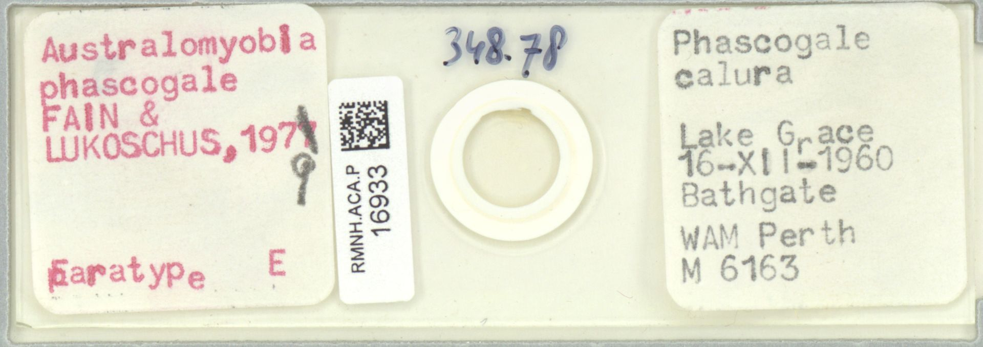RMNH.ACA.P.16933 | Australomyobia phascogale