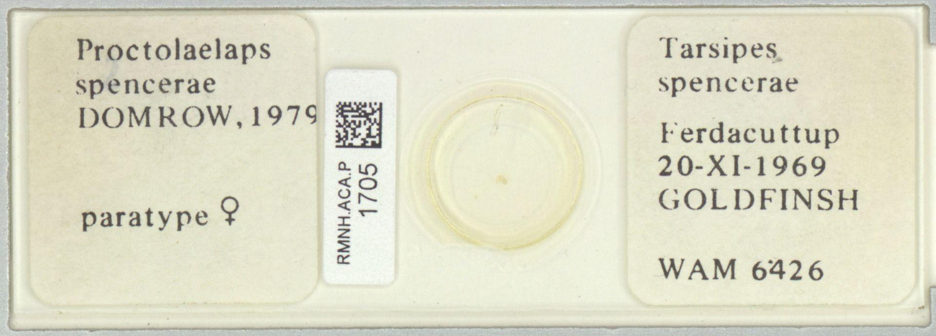 RMNH.ACA.P.1705 | Proctolaelaps spencerae Domrow, 1979