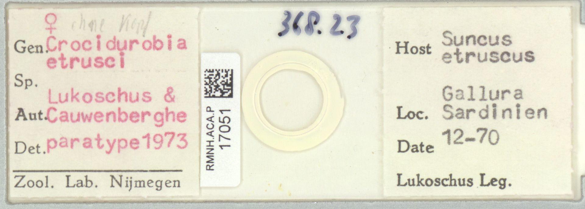 RMNH.ACA.P.17051 | Crocidurobia etrusci