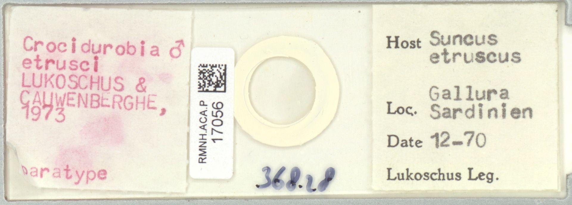 RMNH.ACA.P.17056 | Crocidurobia etrusci