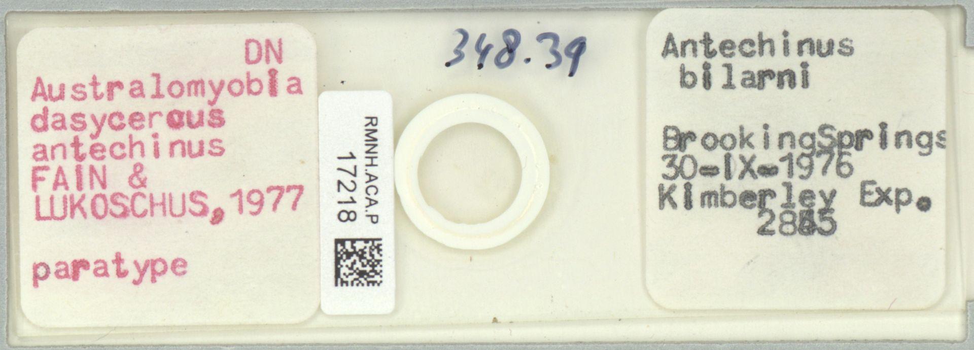 RMNH.ACA.P.17218 | Australomyobia dasycercus antechinus