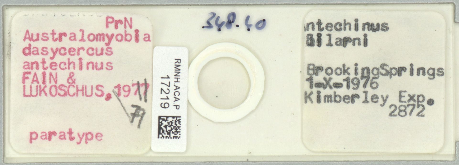 RMNH.ACA.P.17219   Australomyobia dasycercus antechinus