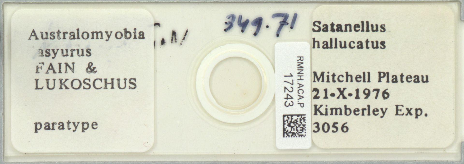 RMNH.ACA.P.17243 | Australomyobia asyurus