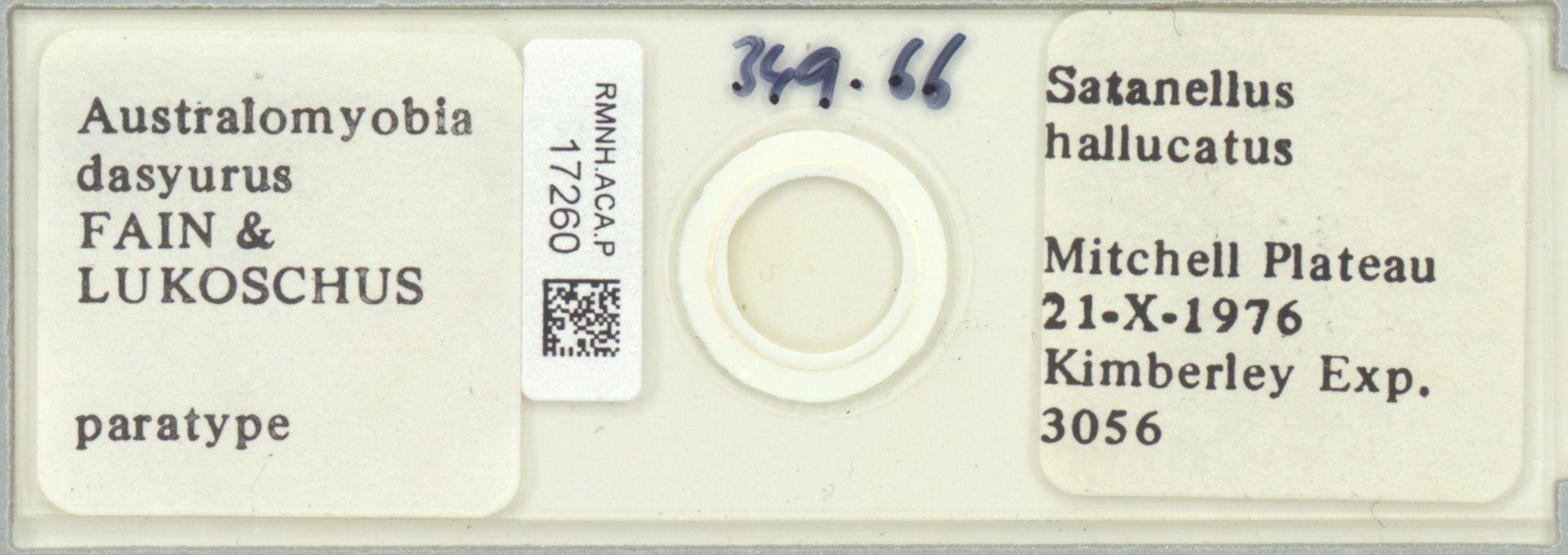 RMNH.ACA.P.17260 | Australomyobia dasyurus