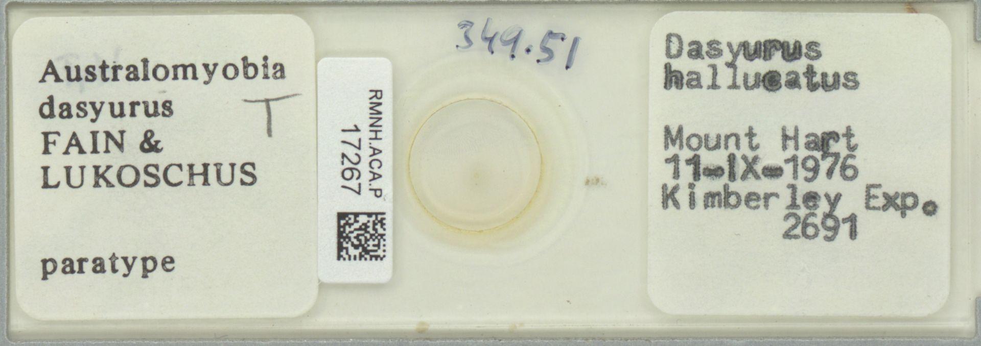 RMNH.ACA.P.17267 | Australomyobia dasyurus