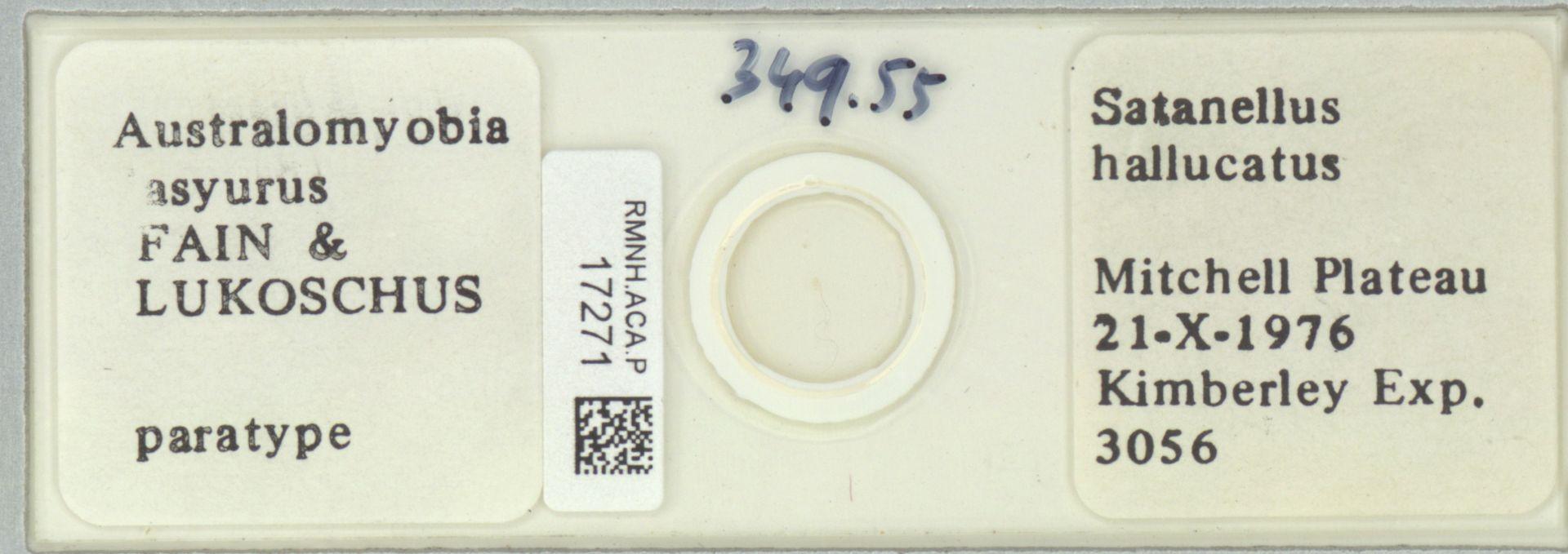 RMNH.ACA.P.17271 | Australomyobia dasyurus