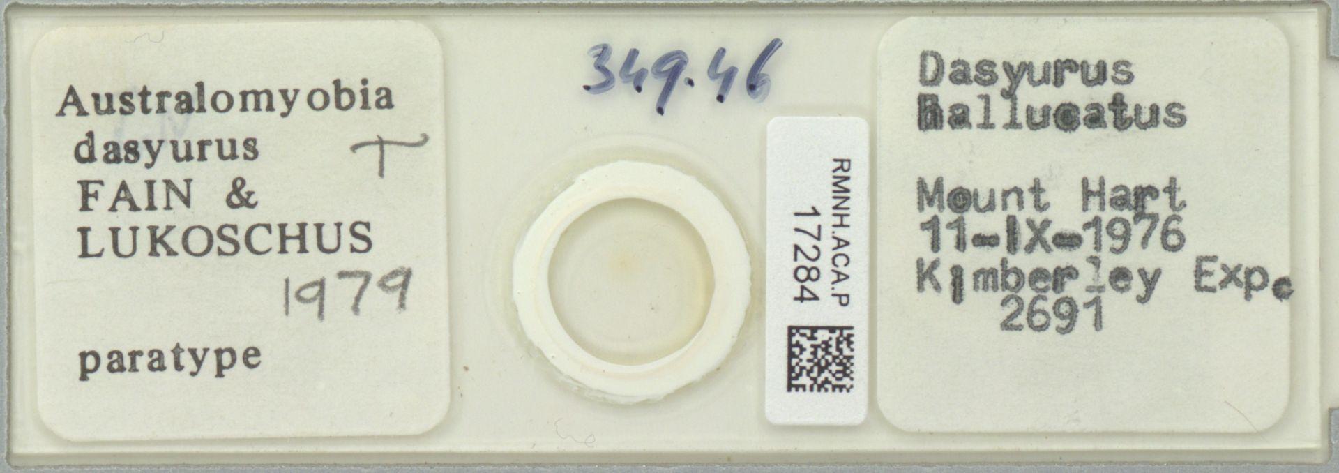 RMNH.ACA.P.17284   Australomyobia dasyurus