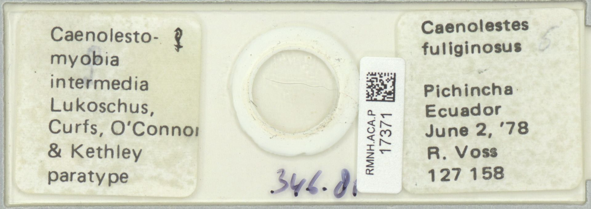 RMNH.ACA.P.17371 | Caenolestomyobia intermedia