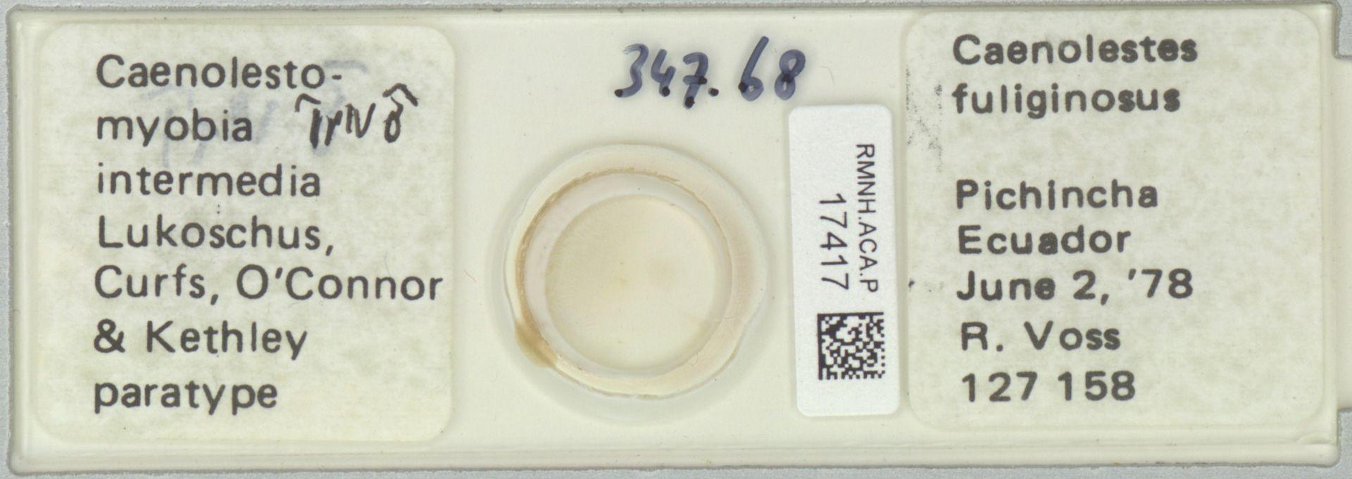 RMNH.ACA.P.17417 | Caenolestomyobia intermedia