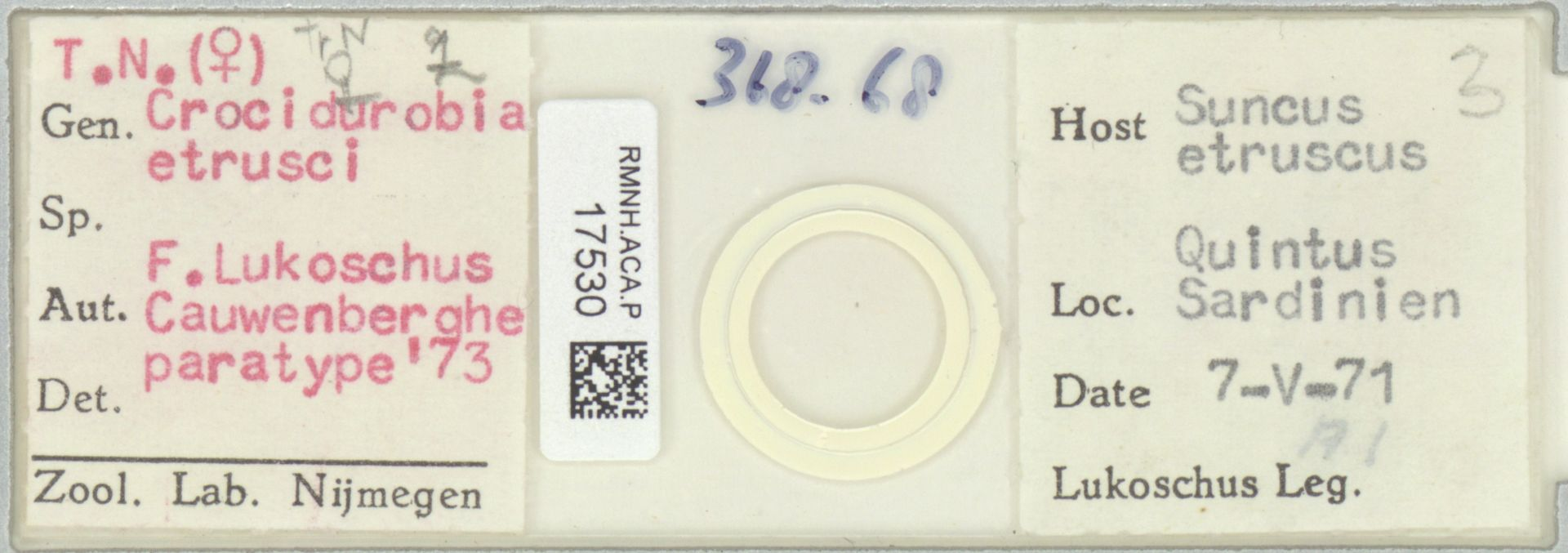 RMNH.ACA.P.17530 | Crocidurobia etrusci F. Lukoschus, Cauwenberghe