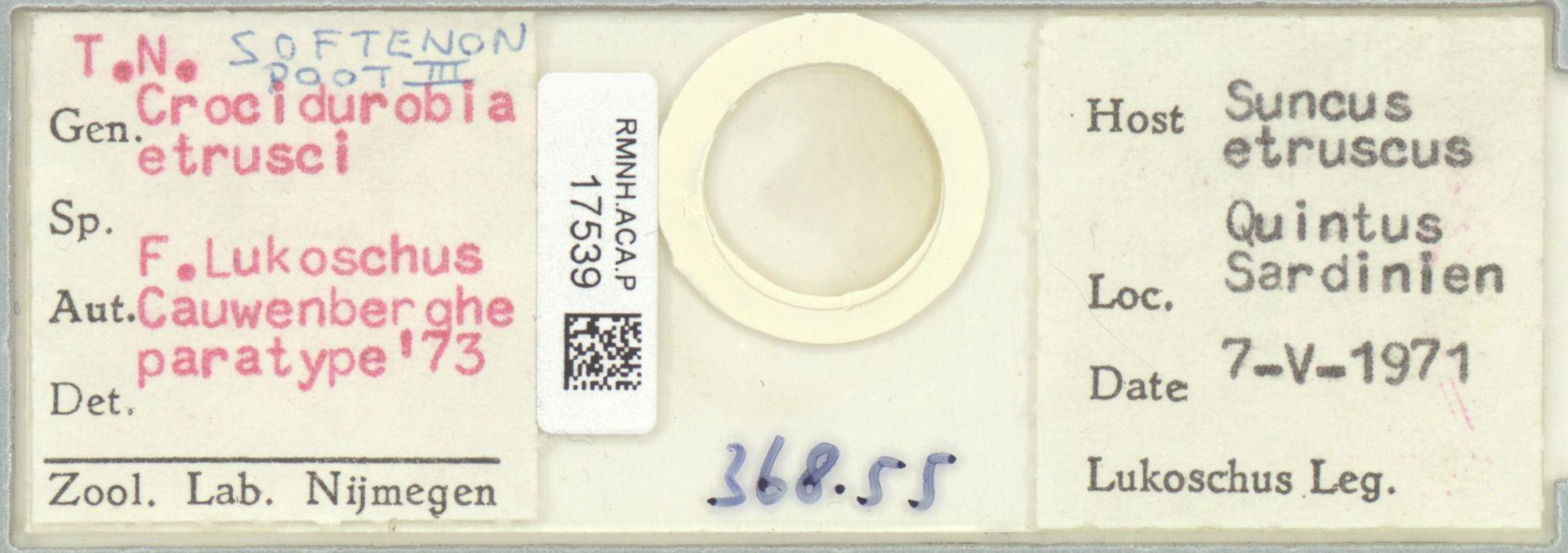 RMNH.ACA.P.17539 | Crocidurobia etrusci F. Lukoschus, Cauwenberghe