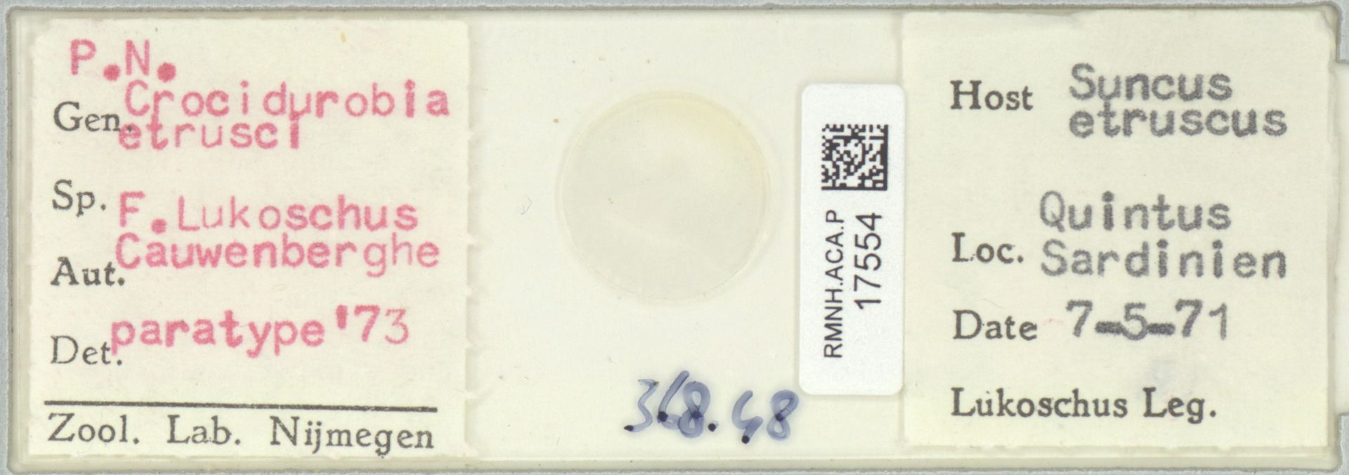 RMNH.ACA.P.17554 | Crocidurobia etrusci F. Lukoschus, Cauwenberghe