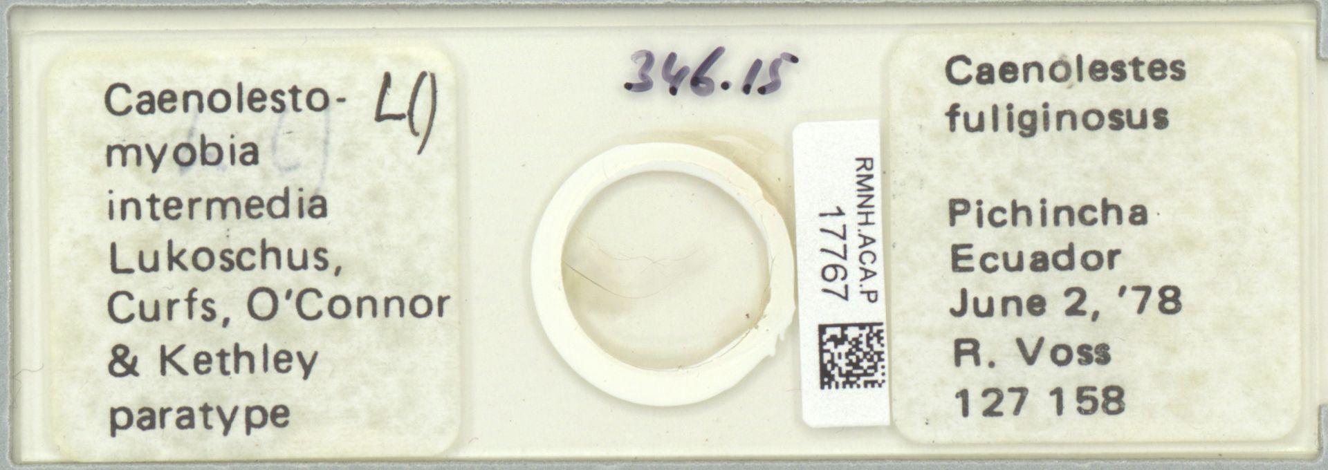 RMNH.ACA.P.17767 | Caenolestomyobia intermedia