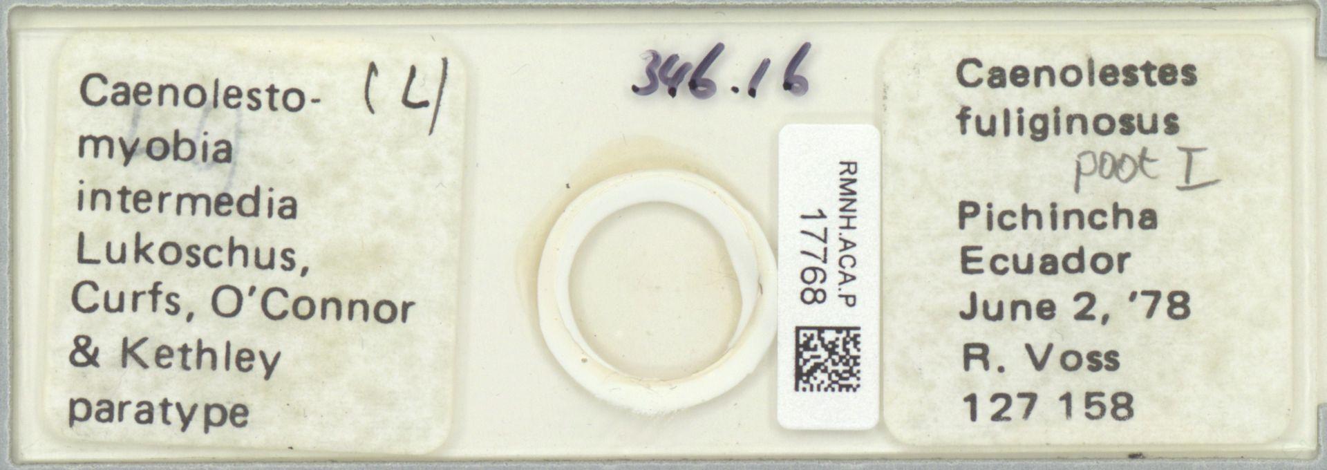 RMNH.ACA.P.17768 | Caenolestomyobia intermedia