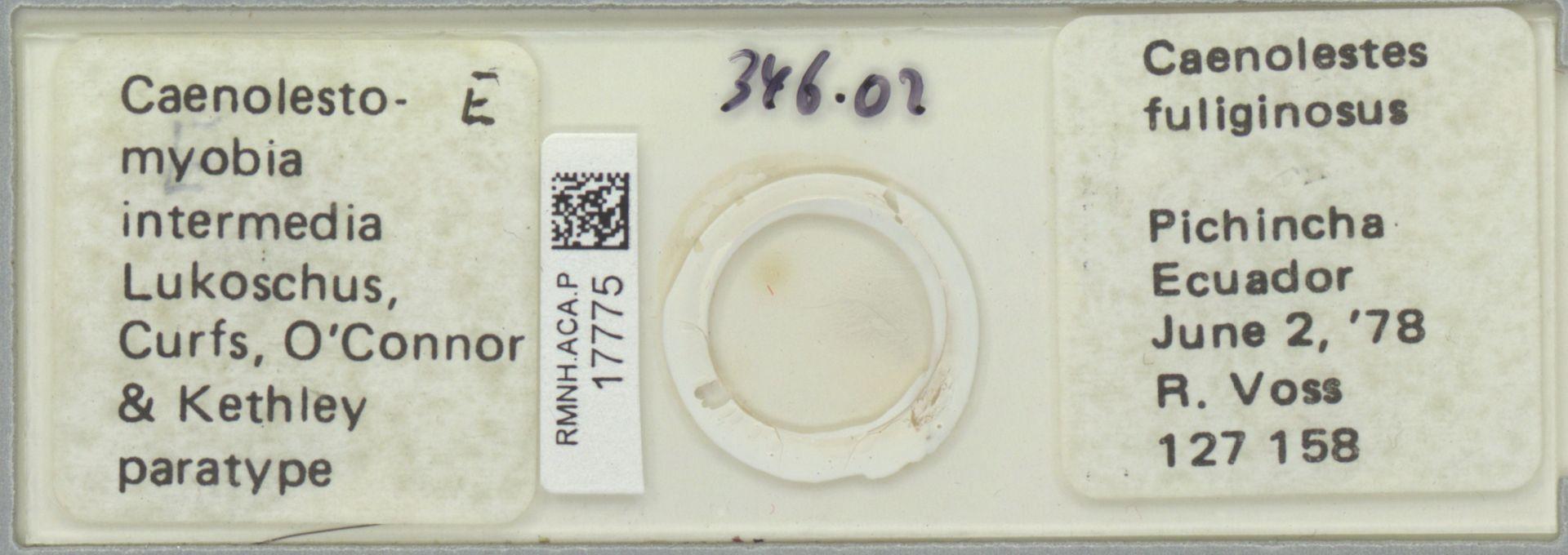 RMNH.ACA.P.17775   Caenolestomyobia