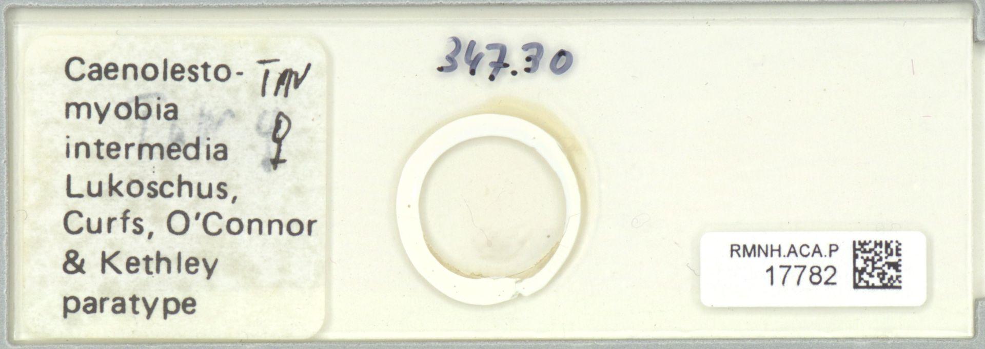 RMNH.ACA.P.17782 | Caenolestomyobia intermedia