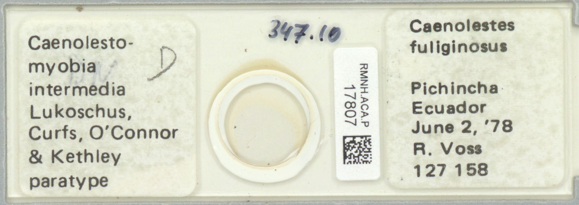 RMNH.ACA.P.17807   Caenolestomyobia intermedia