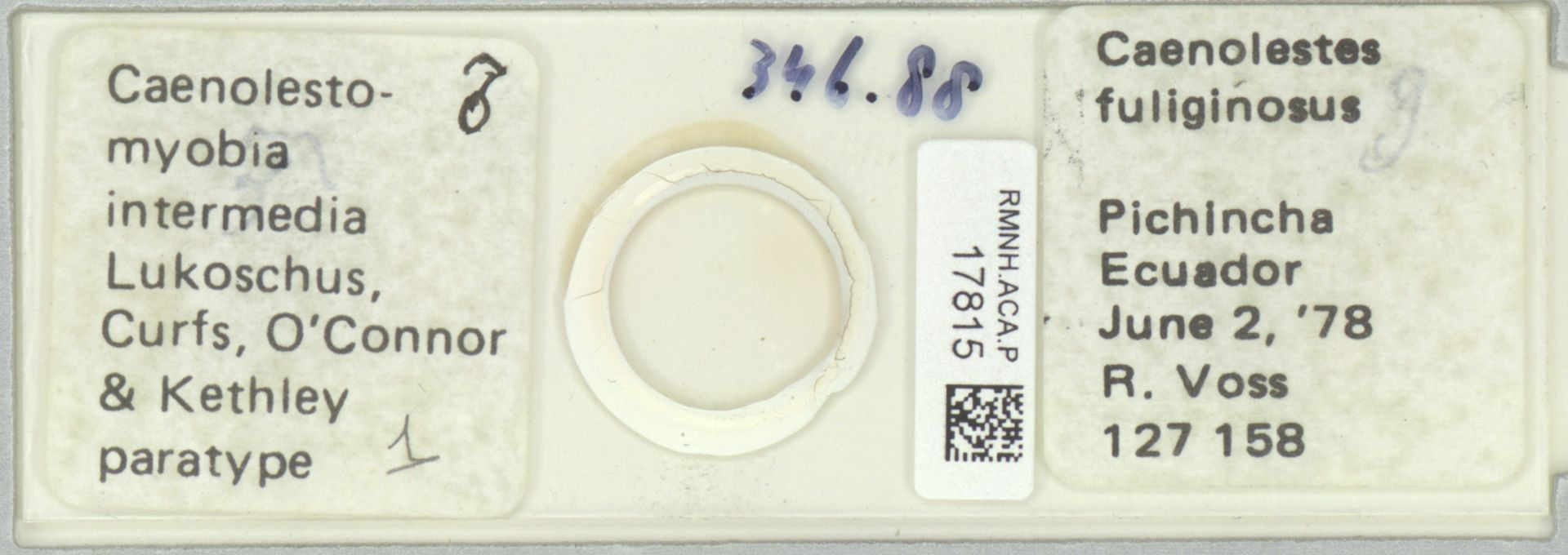RMNH.ACA.P.17815 | Caenolestomyobia intermedia