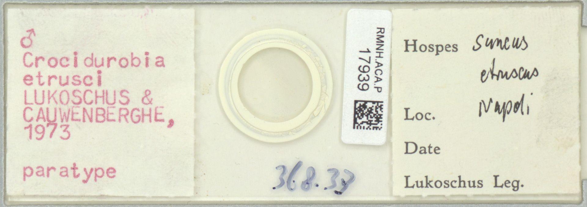 RMNH.ACA.P.17939 | Crocidurobia etrusci Lukoschus & Cauwenberghe, 1973