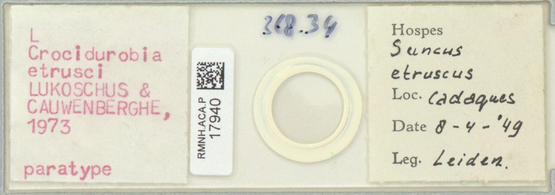 RMNH.ACA.P.17940 | Crocidurobia etrusci Lukoschus & Cauwenberghe, 1973