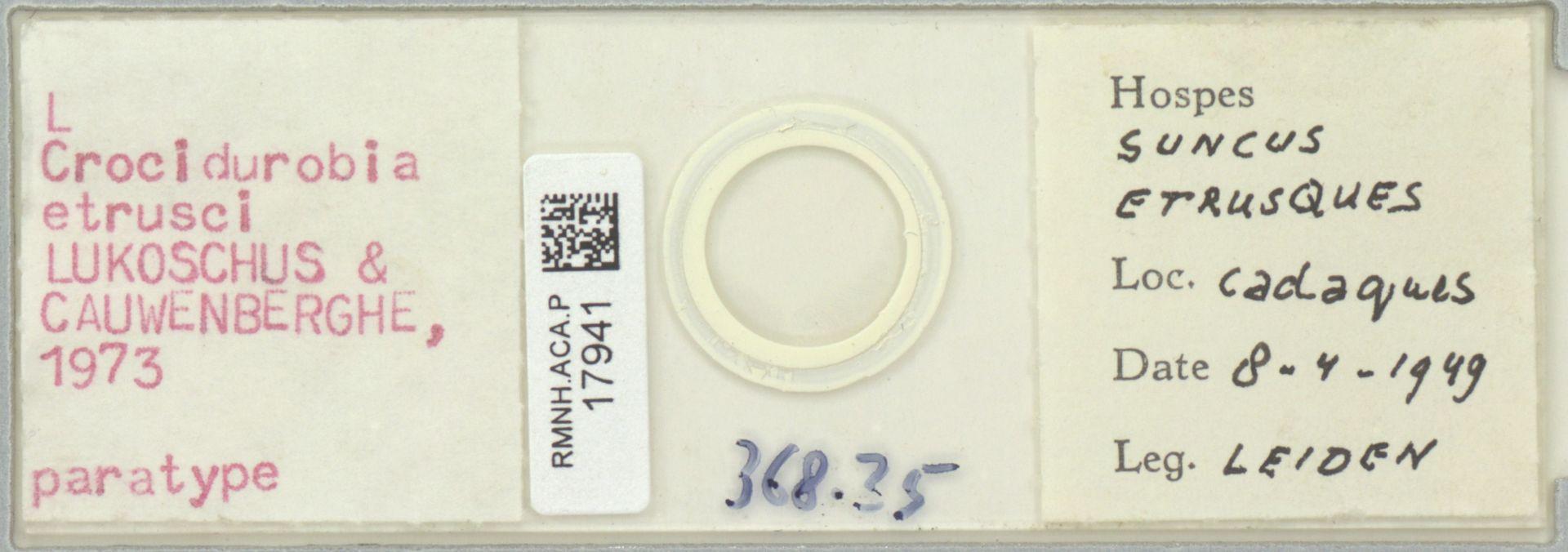RMNH.ACA.P.17941 | Crocidurobia etrusci Lukoschus & Cauwenberghe, 1973