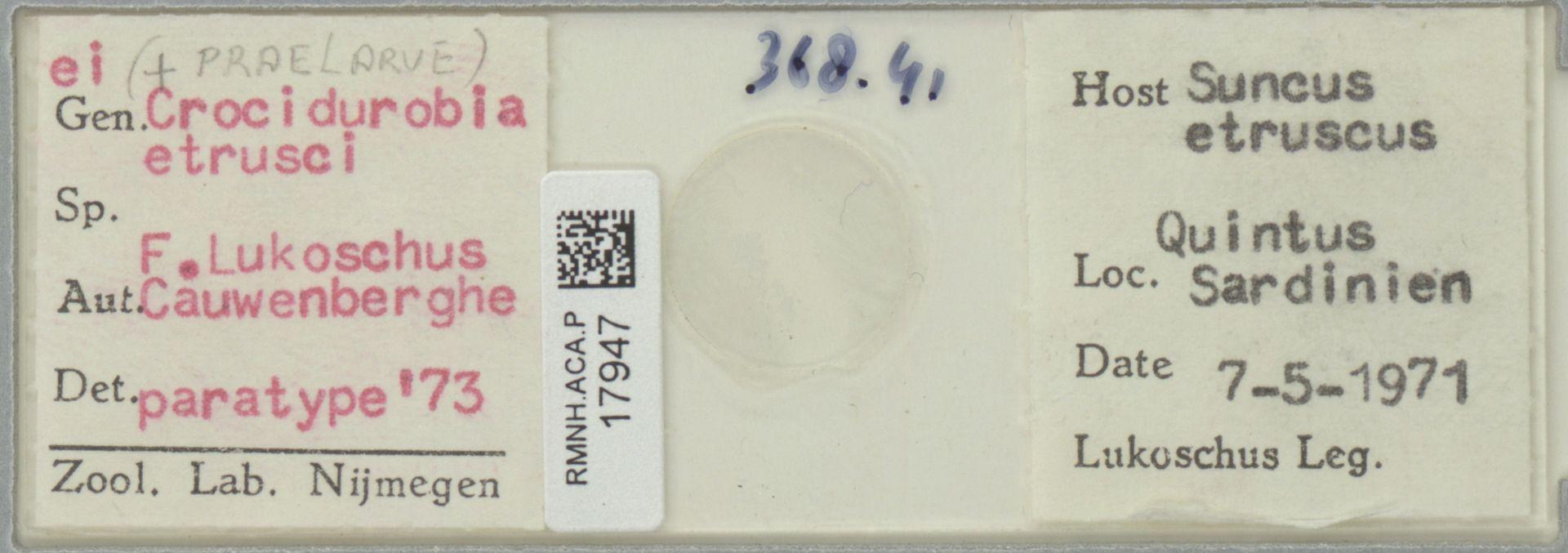RMNH.ACA.P.17947 | Crocidurobia etrusci Lukoschus & Cauwenberghe, 1973