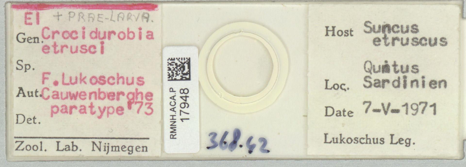 RMNH.ACA.P.17948 | Crocidurobia etrusci F. Lukoschus, Cauwenberghe
