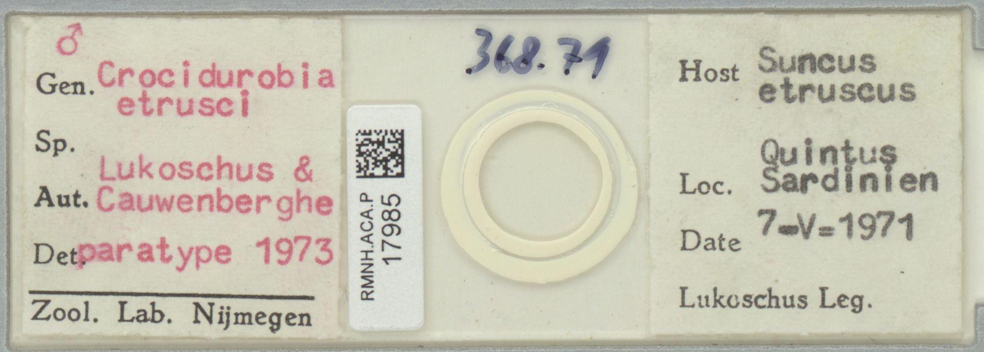 RMNH.ACA.P.17985   Crocidurobia etrusci