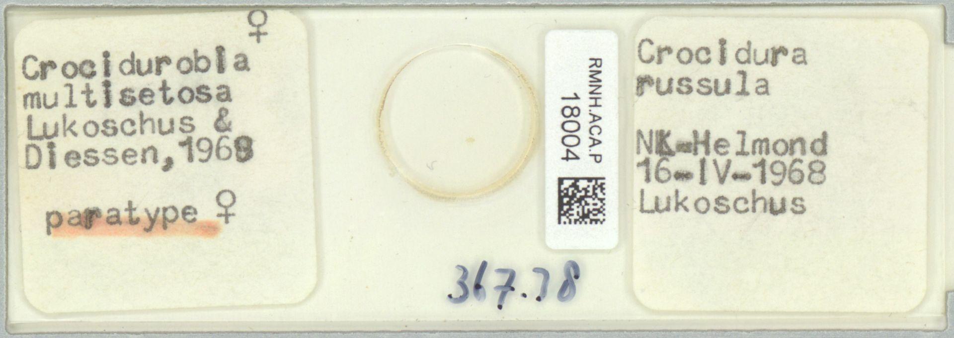 RMNH.ACA.P.18004 | Crocidurobia multisetosa (Lukoschus & Driessen, 1969)