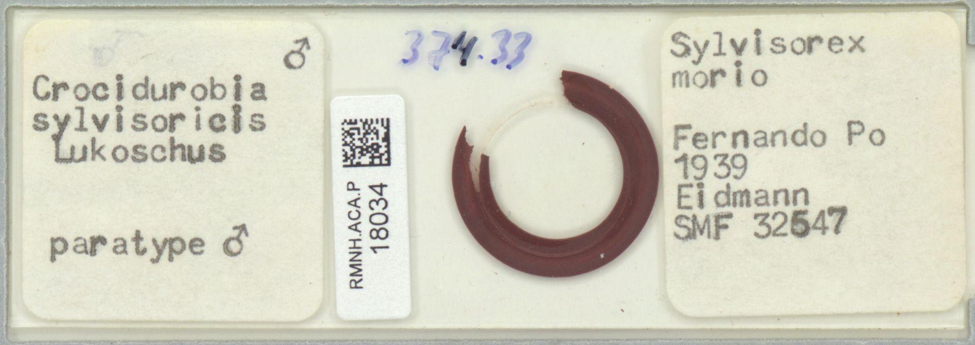 RMNH.ACA.P.18034 | Crocidurobia sylvisoricis