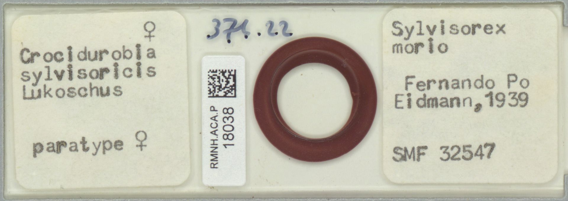 RMNH.ACA.P.18038 | Crocidurobia sylvisoricis
