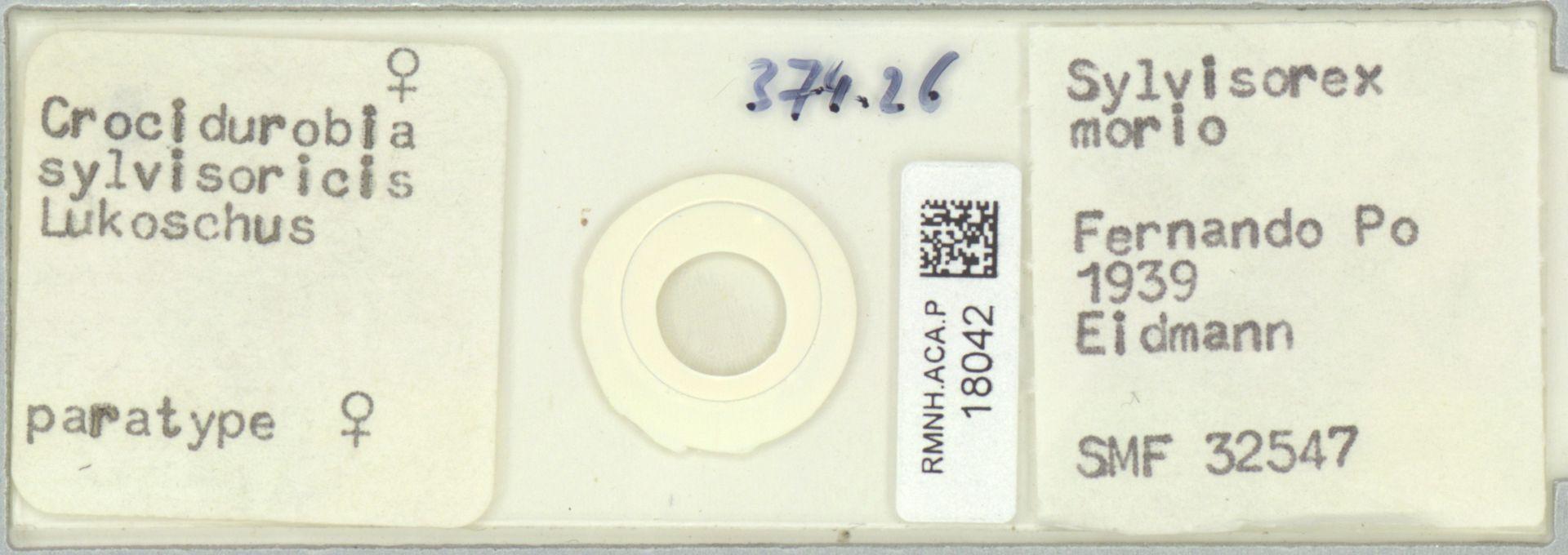 RMNH.ACA.P.18042 | Crocidurobia sylvisoricis