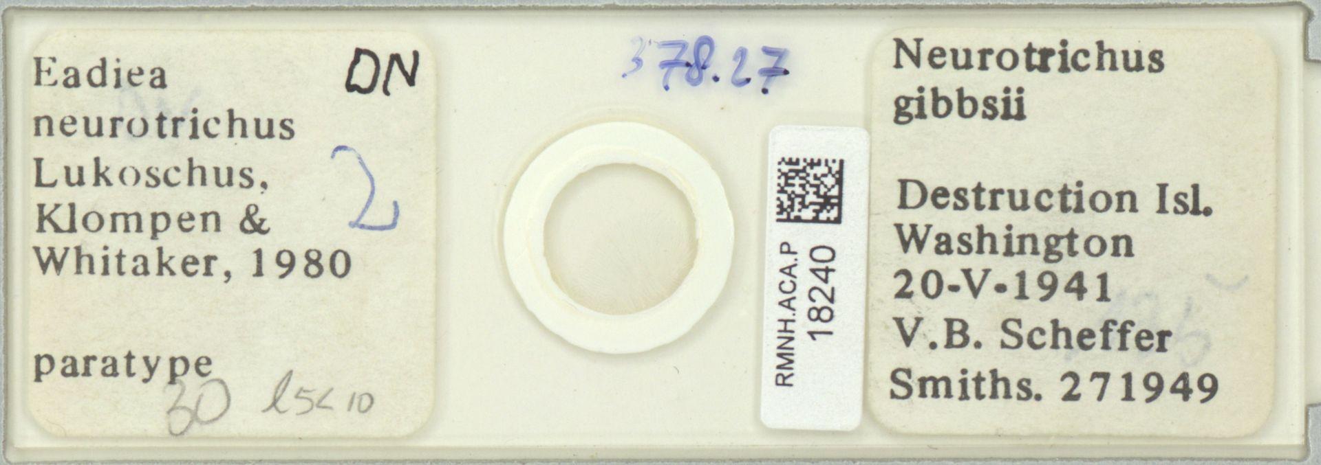 RMNH.ACA.P.18240   Eadiea neurotrichus