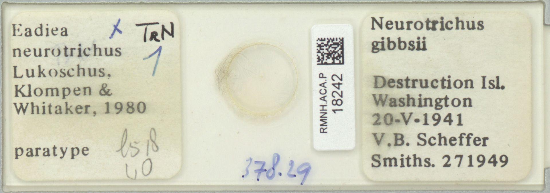 RMNH.ACA.P.18242 | Eadiea neurotrichus
