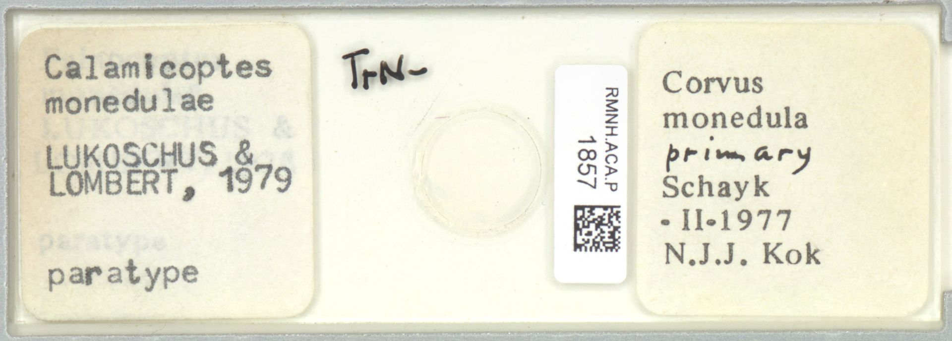 RMNH.ACA.P.1857 | Calamicoptes monedulae Lukoschus & Lombert, 1979