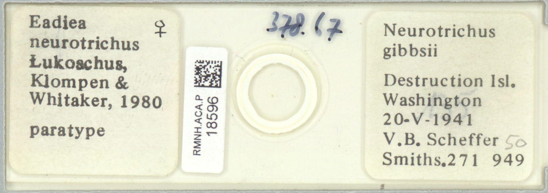 RMNH.ACA.P.18596 | Eadiea neurotrichus Lukoschus, Klompen & Whitaker, 1980