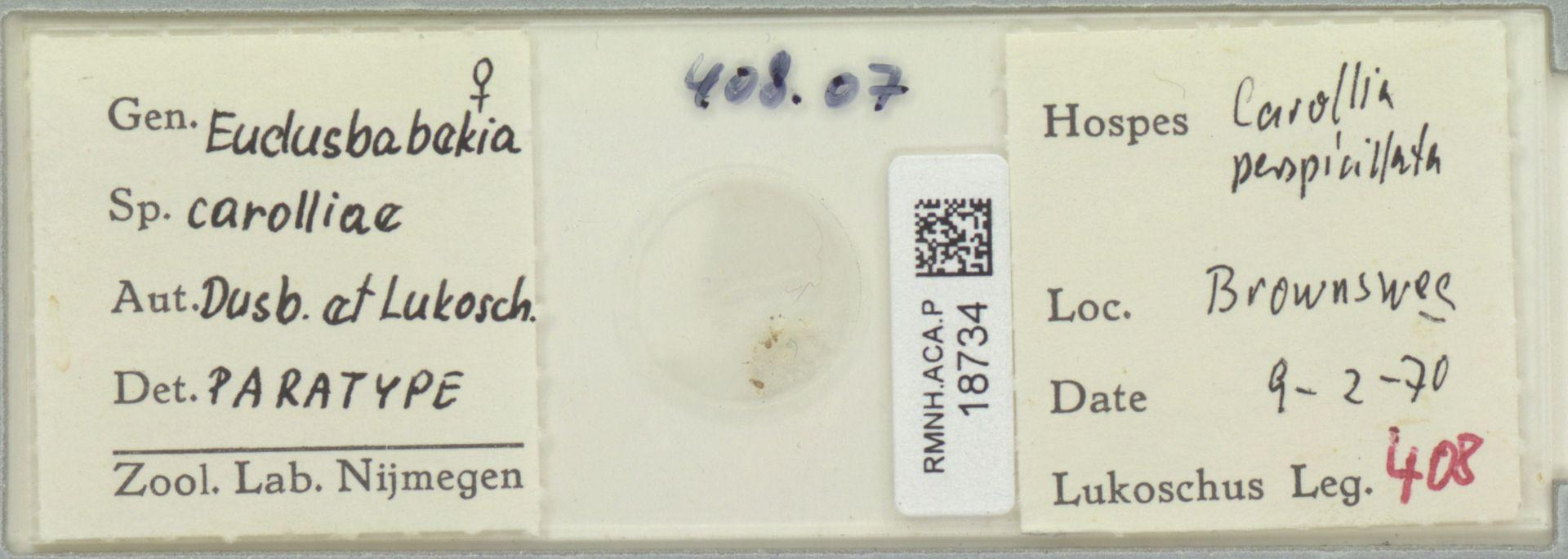 RMNH.ACA.P.18734 | Eudusbabekia carolliae Dusbábek & Lukoschus