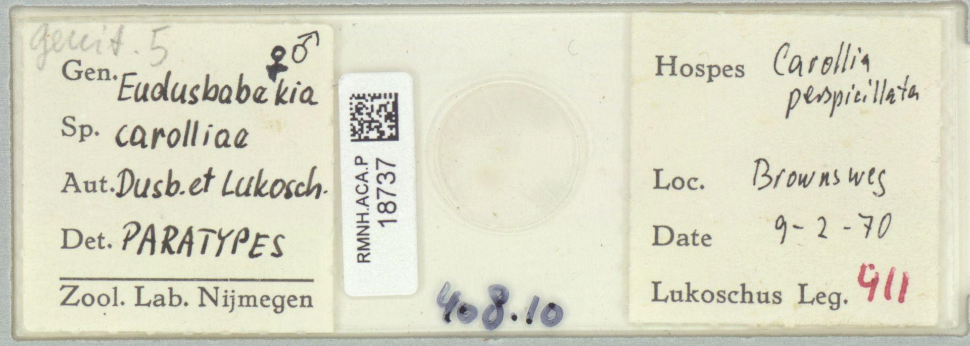 RMNH.ACA.P.18737 | Eudusbabekia carolliae Dusbábek & Lukoschus