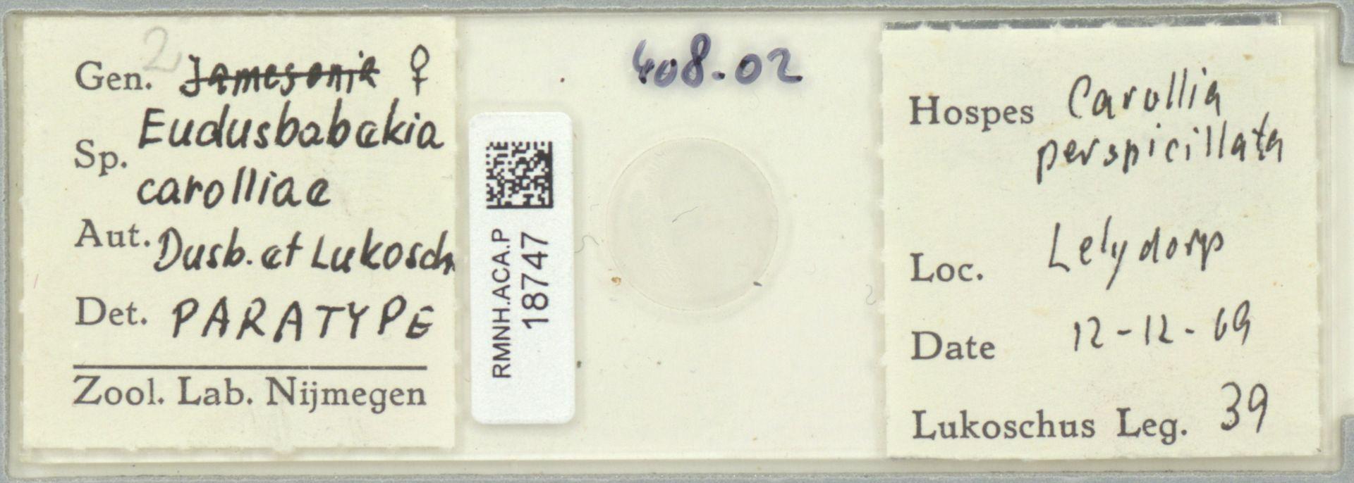 RMNH.ACA.P.18747 | Eudusbabekia carolliae Dusbábek & Lukoschus