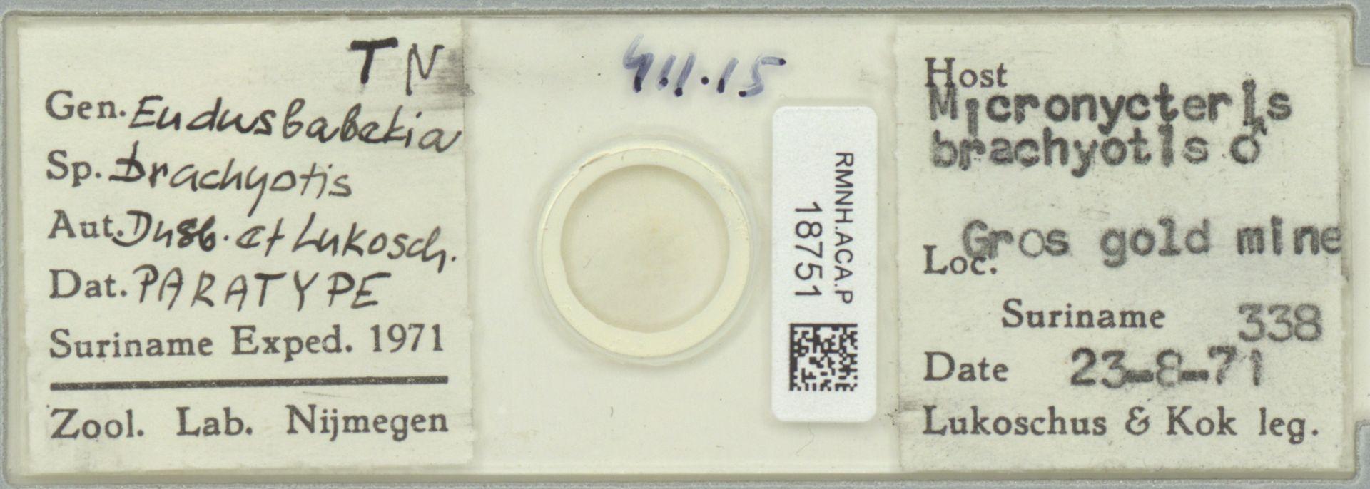 RMNH.ACA.P.18751 | Eudusbabekia brachyotis Dusbábek & Lukoschus