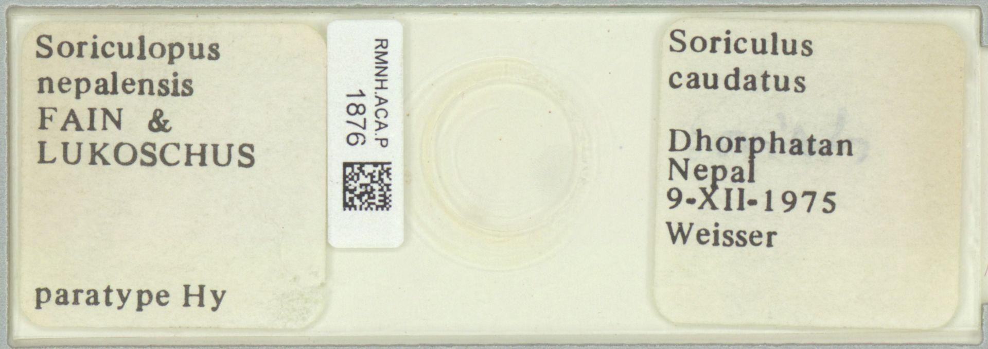 RMNH.ACA.P.1876 | Soriculops nepalensis Fain & Lukoschus